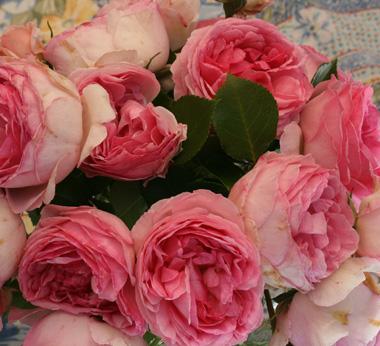 rose du coeur